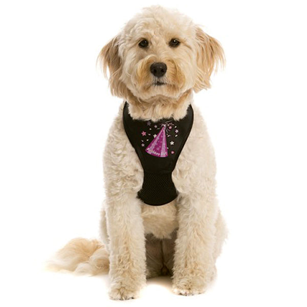 Birthday Girl WagSwag Harness Set
