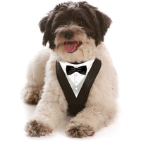 Bow-Tie WagSwag Harness Set