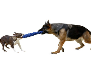 big and small dogs playing tug at each end of rope toy
