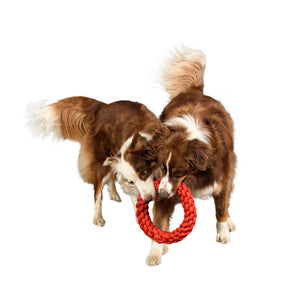 two large dogs with with rope together