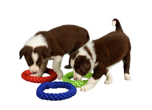 two puppies sniffing rope toys
