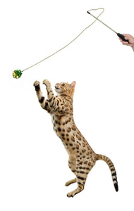 Bengal cat playing with crinkle ball wand toy