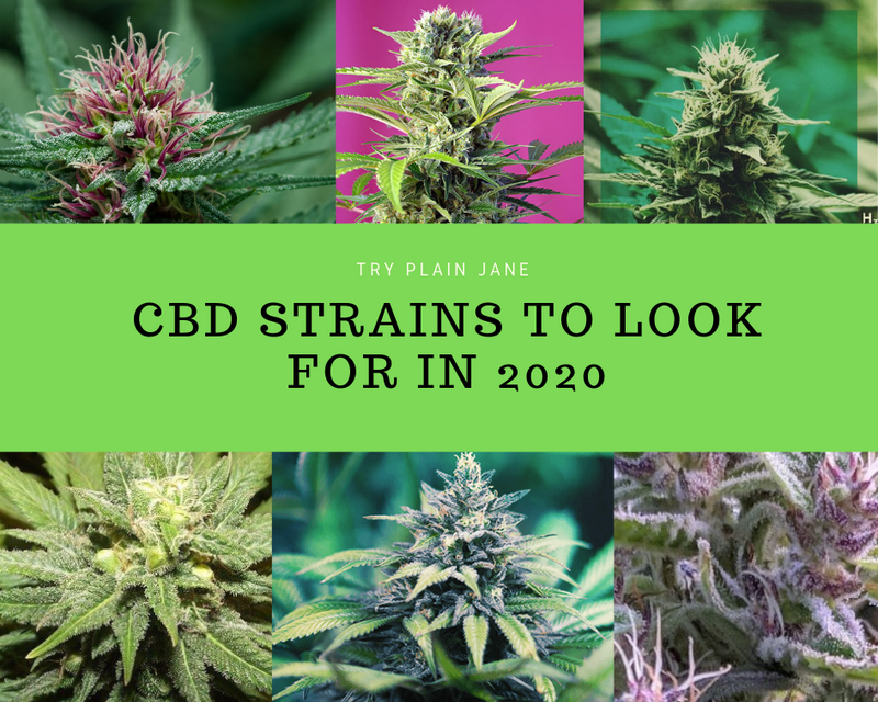 CBD Strains to Look for in 2020