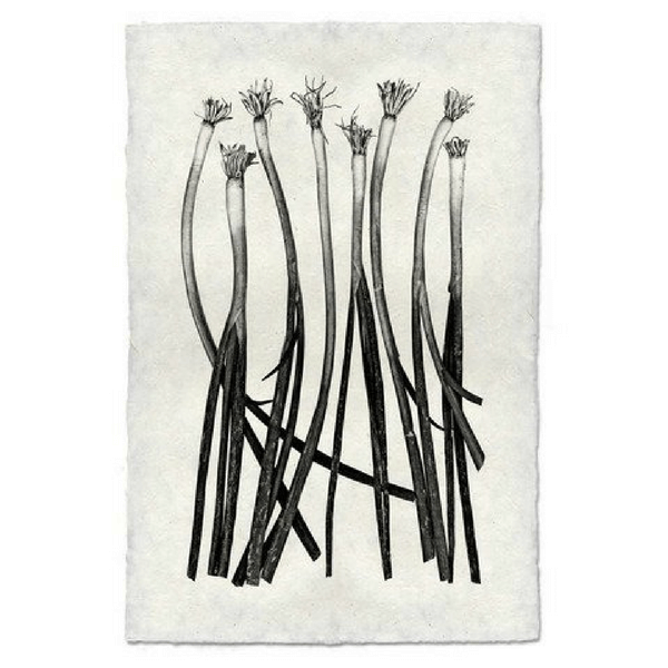 Vegetable study print green onions sugarboo and co