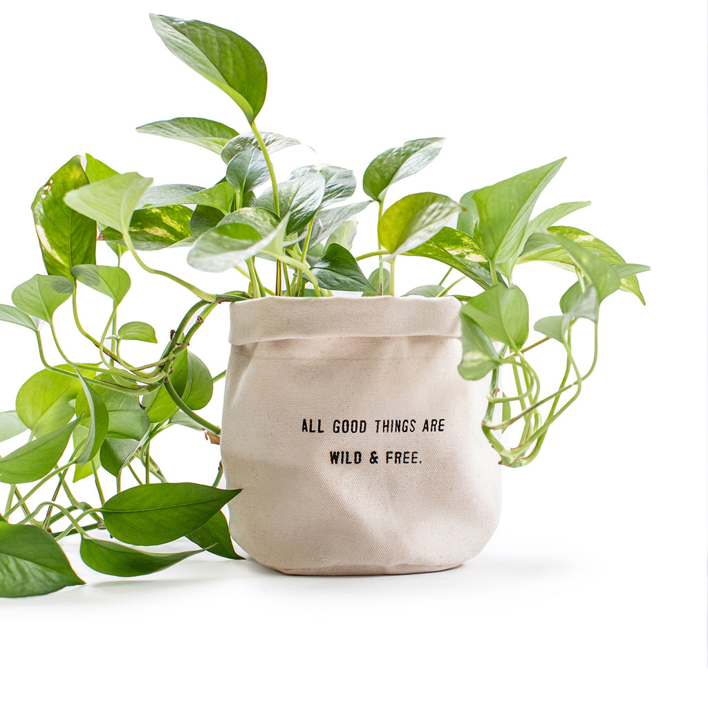 All Good Things Canvas Planter with Mantra Quote