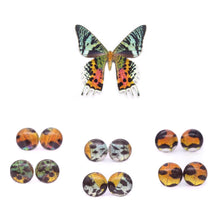 Load image into Gallery viewer, Sunset Moth Glass Studs