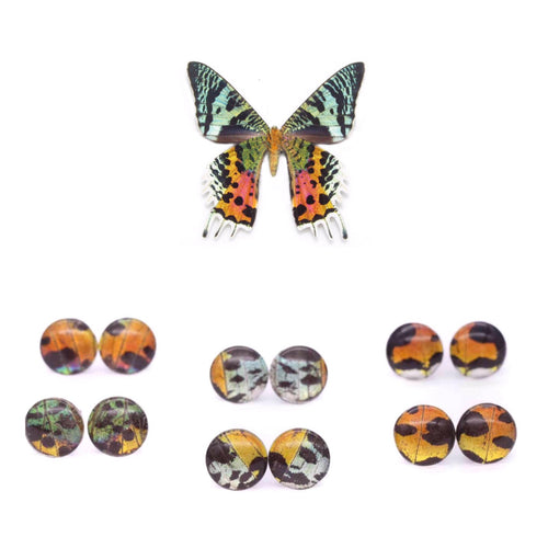 Sunset Moth Glass Studs