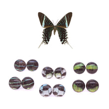 Load image into Gallery viewer, Leilus Butterfly Glass Studs