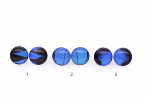 Blue Emperor Glass Studs