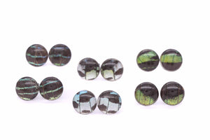 Leilus Butterfly Glass Studs