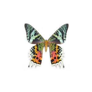 Statement Ring - Rainbow Wings