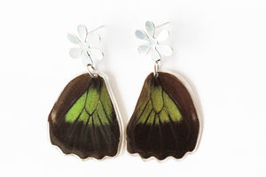 Steel Pin Earrings - Trogonoptera Wings