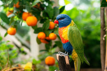 Load image into Gallery viewer, Hand Carved DecoBird Rainbow Lorikeet