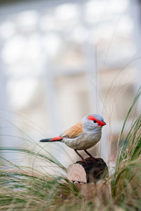 Hand Carved DecoBird Red-Browed Finch