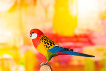 Load image into Gallery viewer, Hand Carved DecoBird Eastern Rosella