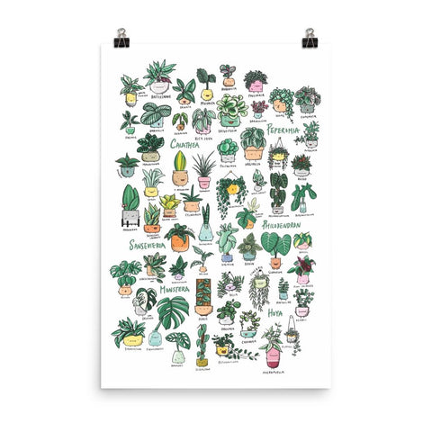 (COMING SOON) Plant Families Vol.1 Poster