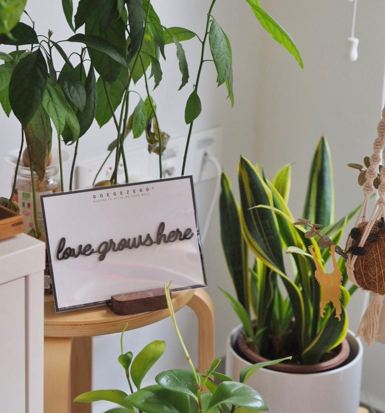 Self-Adhesive Quote - love grows here