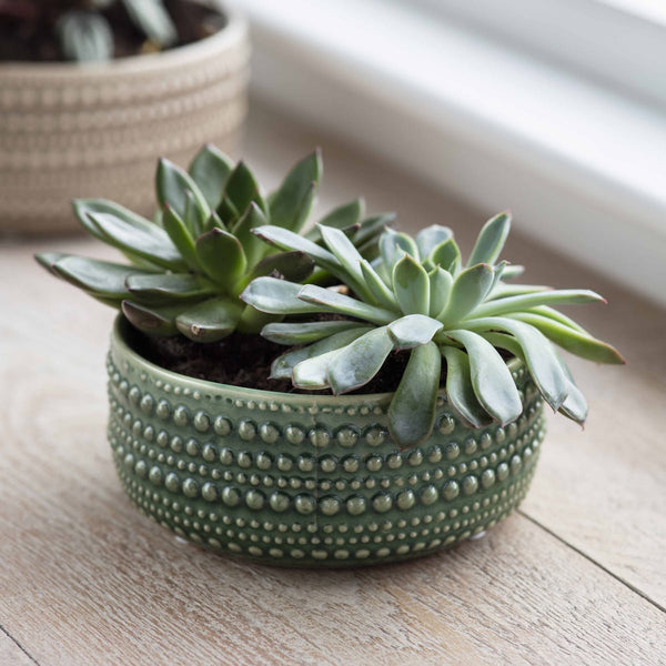green ceramic plant pot