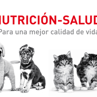Royal Canin Alimento Lata Perros Adulto Mayor Mature +8 .170kg iPOS