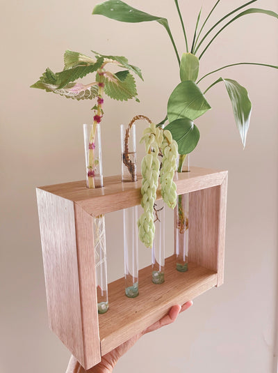 Propagation Station Australia that will make propagation at home easy.