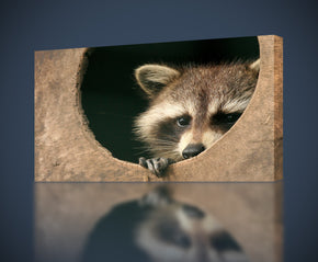 Raccoon Animals Canvas Print Giclee