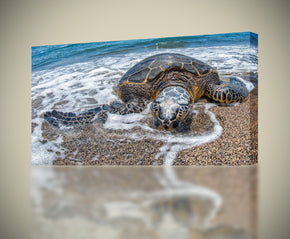 Sea Turtle Ocean Animals Canvas Print Giclee