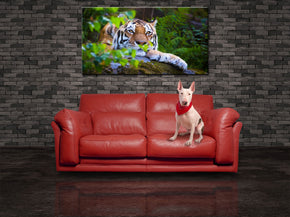 Tiger Wild Safari Animals Canvas Print Giclee