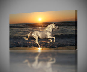 White Horse At Sunset Animals Canvas Print Giclee