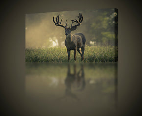Buck Canvas Print Giclee