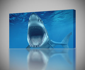 White Shark Canvas Print Giclee