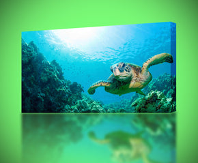 Sea Turtle Canvas Print Giclee