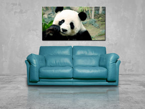 Panda Bear Canvas Print Giclee