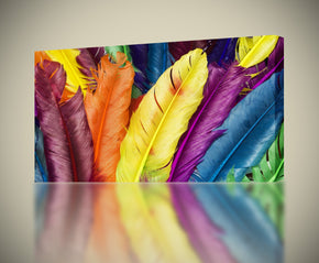Colorful Feathers Canvas Print Giclee