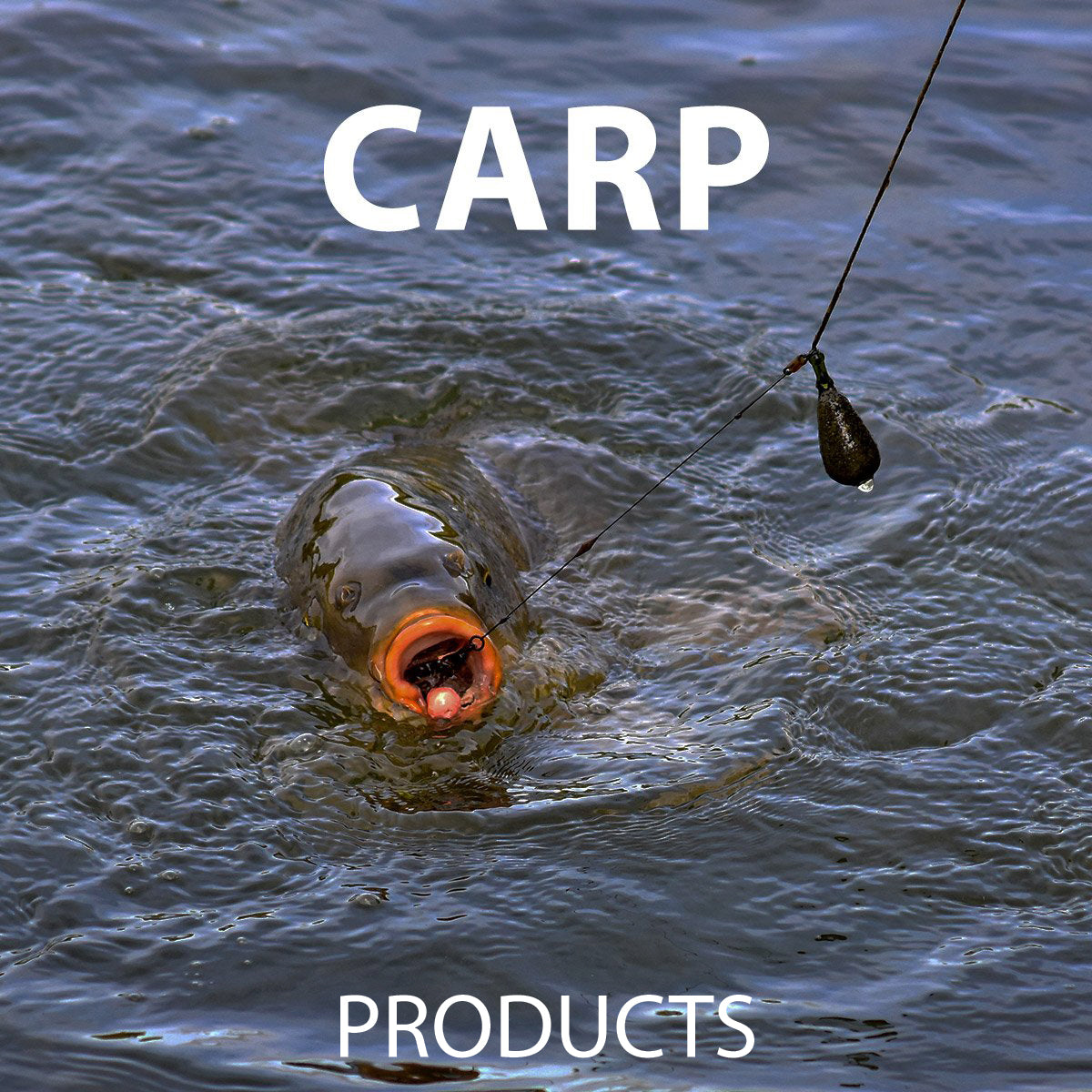 Carp products