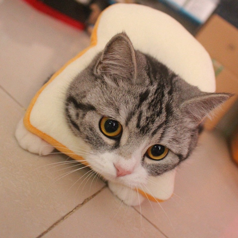 Bread Shaped Healing Collar for Cat