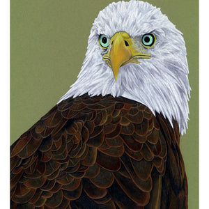 American Bald Eagle Illustration (Colour Pencil on card) Giclee Print