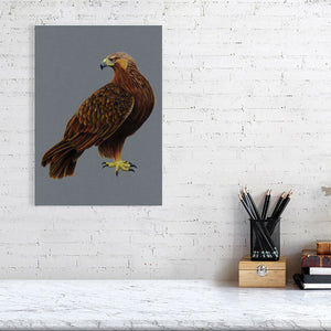 Golden Eagle Illustration (Colour Pencil on card) Giclee Print
