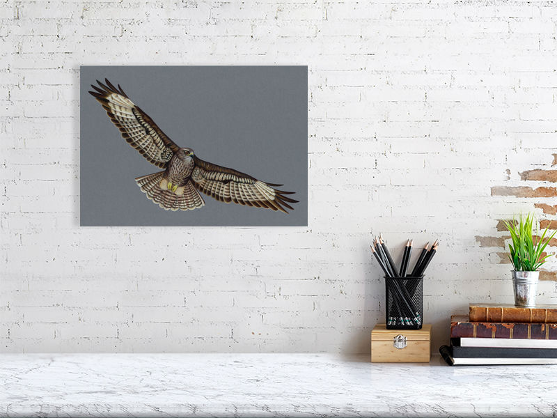 Buzzard Illustration (Colour Pencil on card) Giclee Print