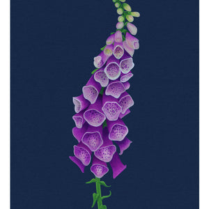 Botanical Illustration study of a Foxglove - Giclee Print