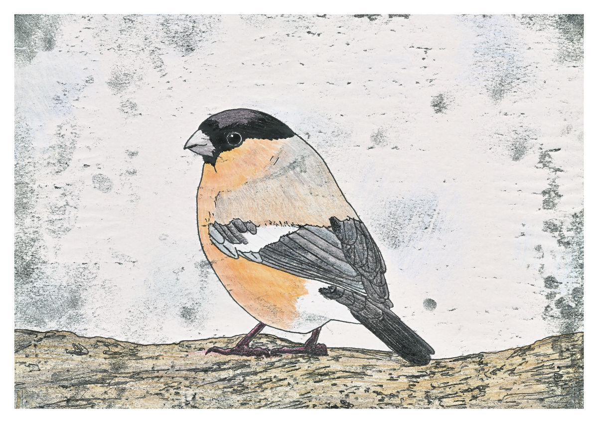 A hand coloured monoprint of a Bullfinch. Available as a Premium Giclee Print.