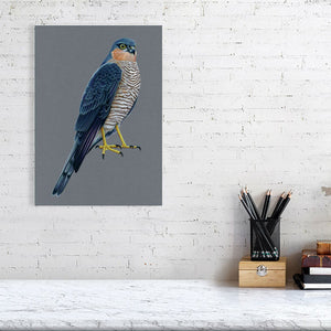 Sparrowhawk Illustration (Colour Pencil on card) Giclee Print