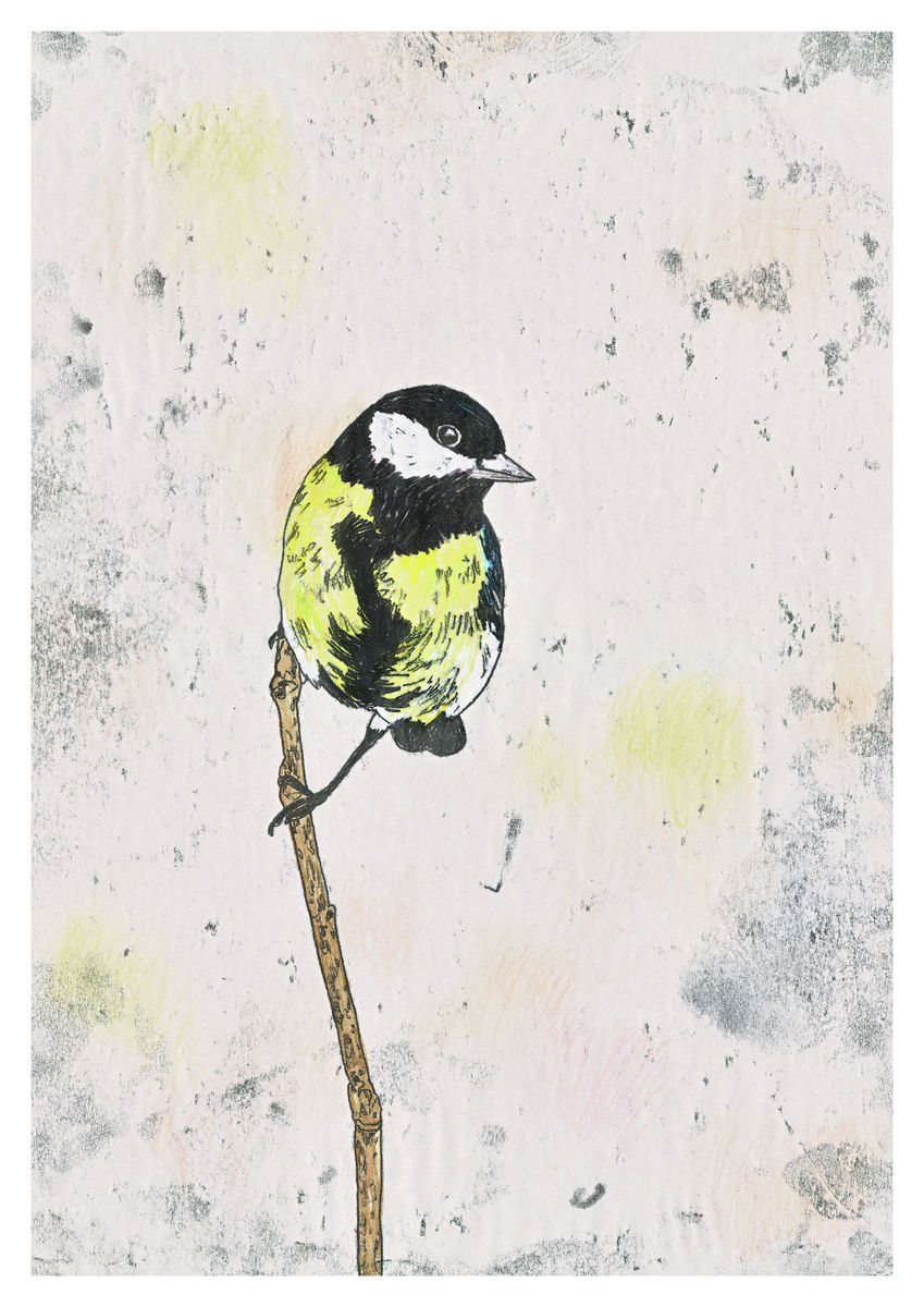 A Great Tit perched on a branch. Original Artwork - hand coloured monoprint. Available as a Giclee print.