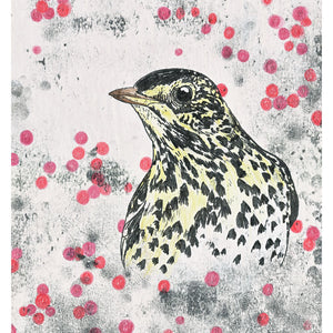 A hand coloured monoprint of a Song Thrush. Available as a Giclee Print.