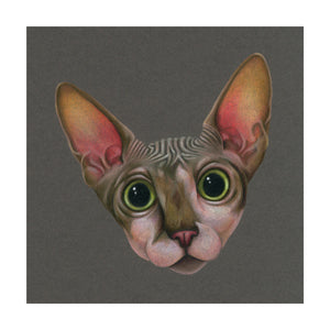 A colour pencil portrait of a hairless Sphynx Lair Cat. Available as a Giclee Print.