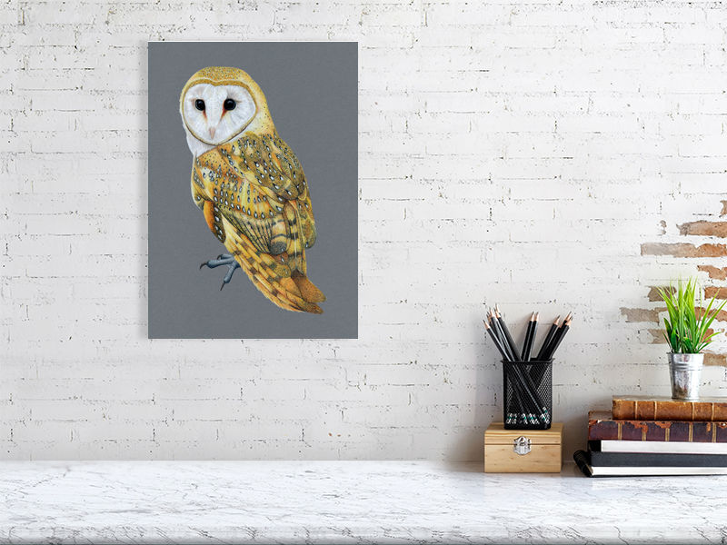Barn Owl Illustration (Colour Pencil on card) Giclee Print