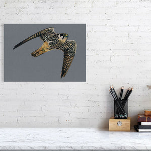 Hobby Illustration (Colour Pencil on card) Giclee Print