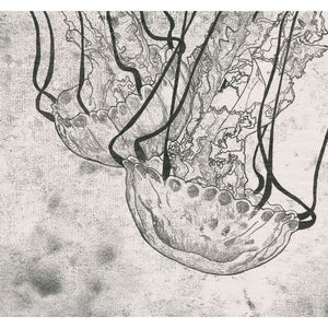 Monoprint of a Jellyfish seen at Monterey Bay Aquarium - Available as a Giclee Print.
