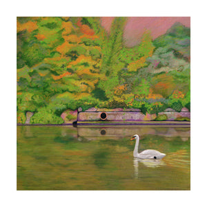 A Swan swimming on the Canal (Colour Pencil on Card) Giclee Print.