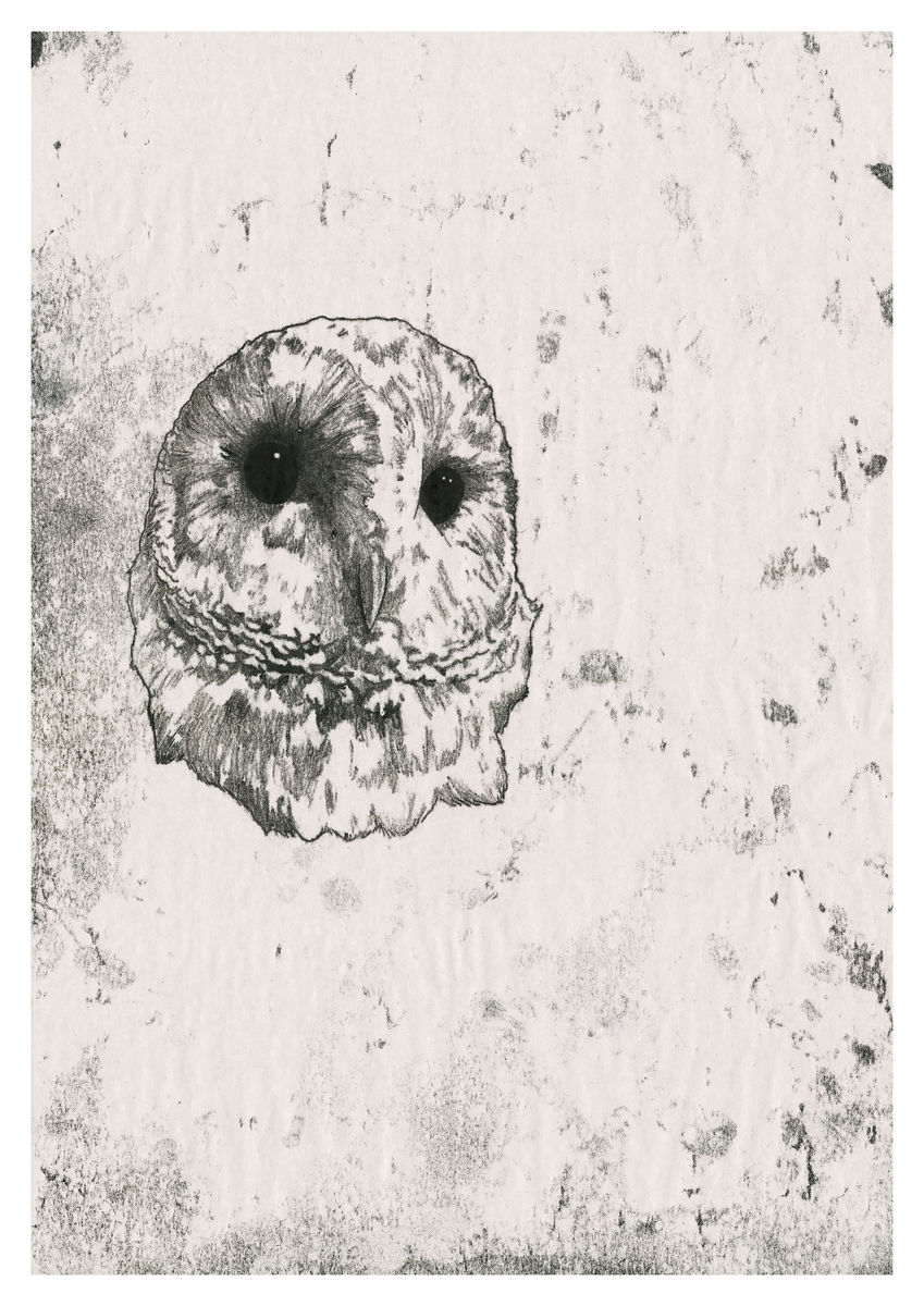 Original artwork of a Barn Owl, created as a monoprint. Available as a Giclee Print.