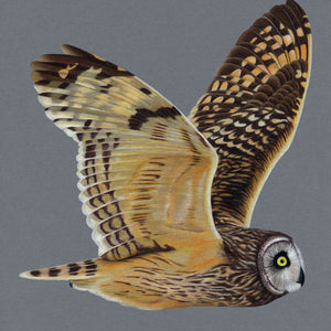 Short Eared Owl Illustration (Colour Pencil on card) Giclee Print